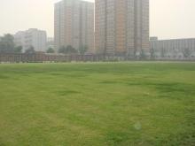 北京原人ラグビークラブ-100905_ground1
